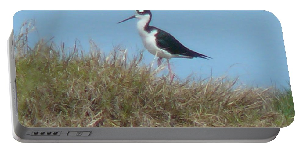 Bird Portable Battery Charger featuring the photograph Black-necked Stilt by Eldora Schober Larson