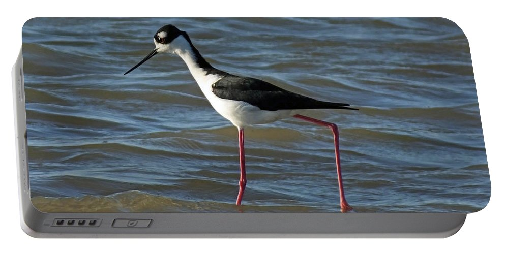 Shorebird Portable Battery Charger featuring the photograph Black Necked Stilt by Lizi Beard-Ward