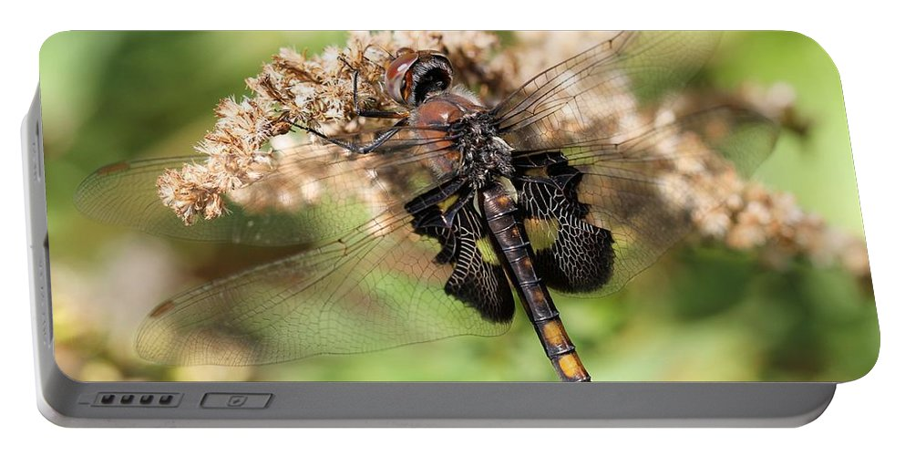 Black Saddlebags Dragonfly Portable Battery Charger featuring the photograph Black Saddlebags Dragonfly At Rest by Doris Potter
