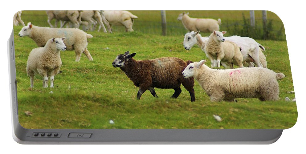 Sheep Portable Battery Charger featuring the photograph Black Sheep by Nancy L Marshall