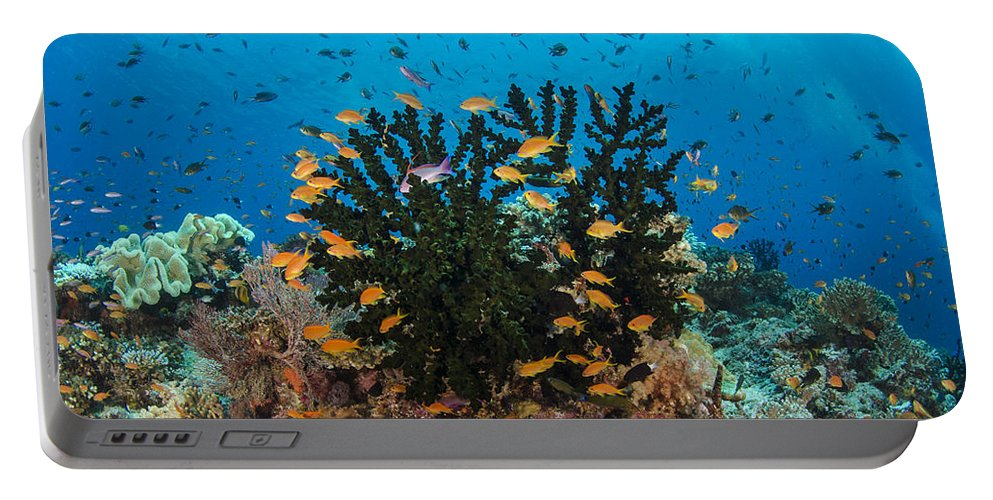 Pete Oxford Portable Battery Charger featuring the photograph Black Sun Coral And Sea Goldies Fiji by Pete Oxford