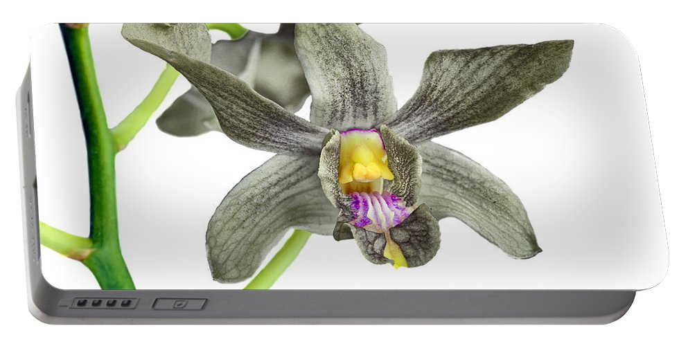 Anniversary Portable Battery Charger featuring the photograph Black Yellow And Purple Orchid by Paul Fell
