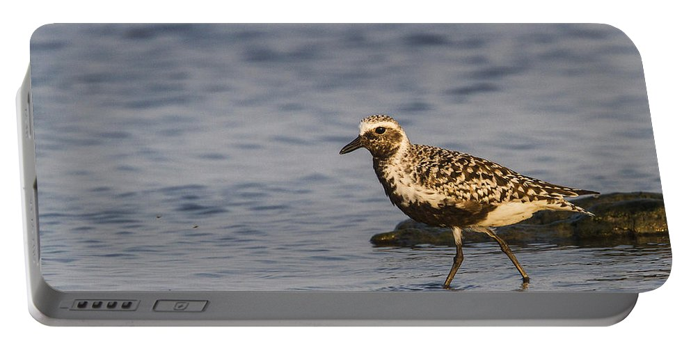 Doug Lloyd Portable Battery Charger featuring the photograph Blackbelied Plover by Doug Lloyd