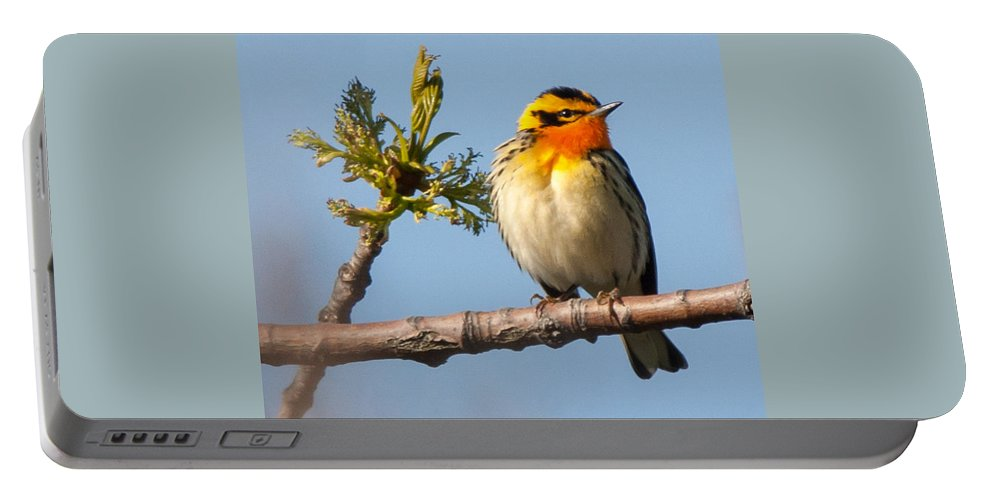 Bird Portable Battery Charger featuring the photograph Blackburnian Warbler by Richard Kitchen