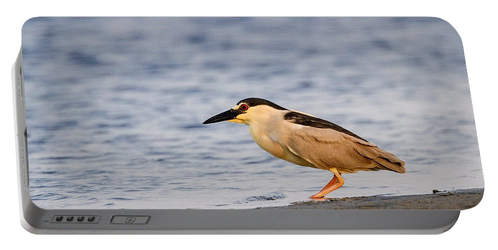 Doug Lloyd Portable Battery Charger featuring the photograph Blackcrowned Night Heron by Doug Lloyd