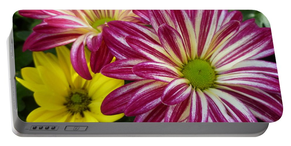 Daisy Portable Battery Charger featuring the photograph Blast Of Colors by Lingfai Leung