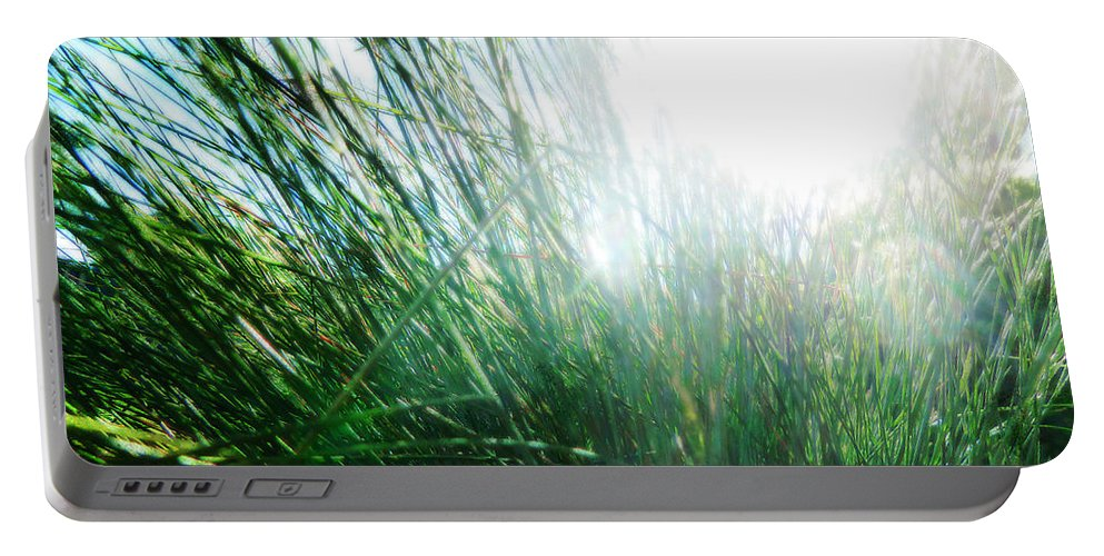 Grass Portable Battery Charger featuring the photograph Blinded By The Light by Steve Taylor