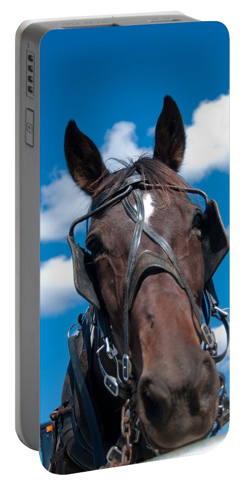 Horse Portable Battery Charger featuring the photograph Blinders Because All Distractions Are Equal by Randall Branham