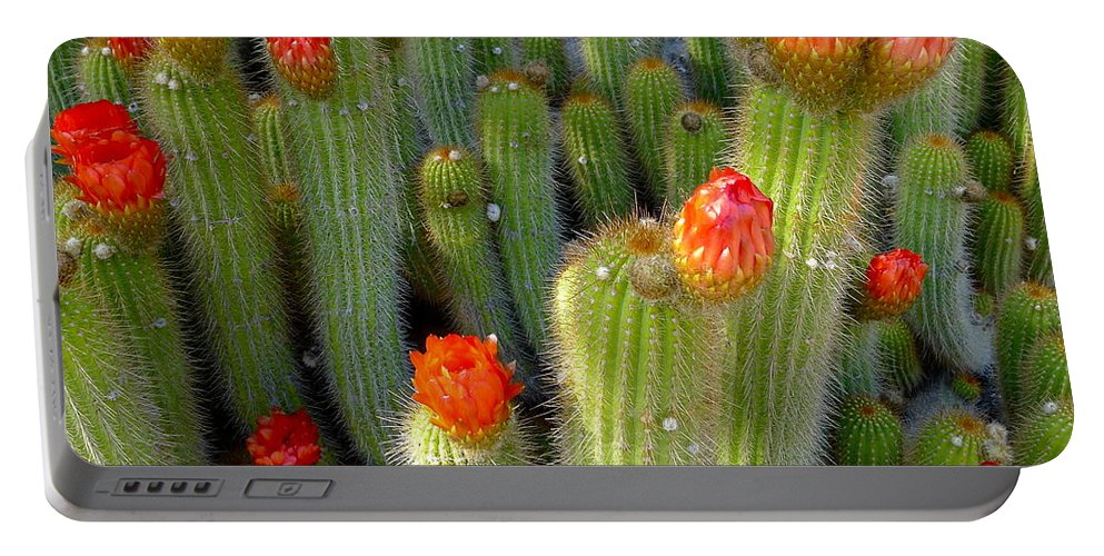 Trichocereus Portable Battery Charger featuring the photograph Blooming Cacti by Denise Mazzocco