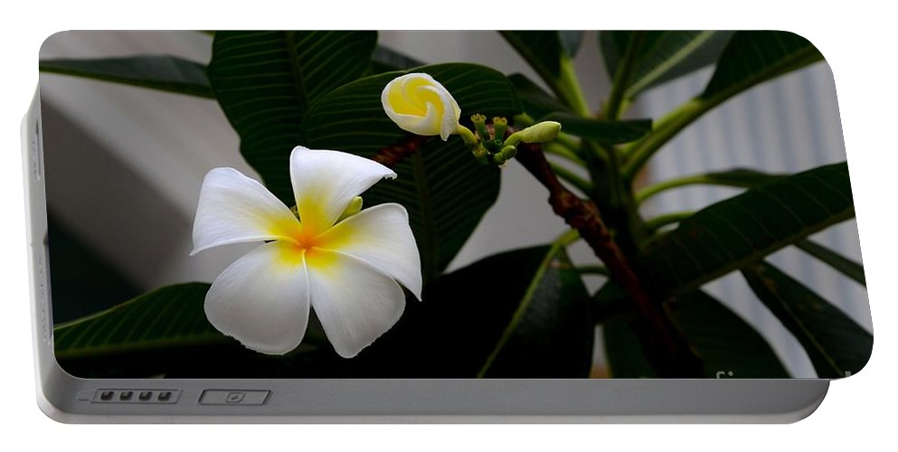Flower Portable Battery Charger featuring the photograph Blooming Frangipani Flower Alongside Bud by Imran Ahmed
