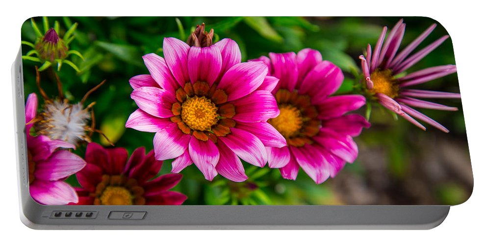 Flowers Portable Battery Charger featuring the photograph Blooming With Life by Karol Livote
