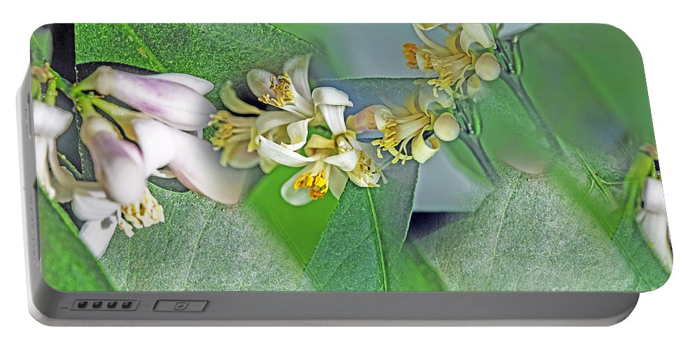 Nature Portable Battery Charger featuring the photograph Blooms Of Lemon Tree by Elvis Vaughn