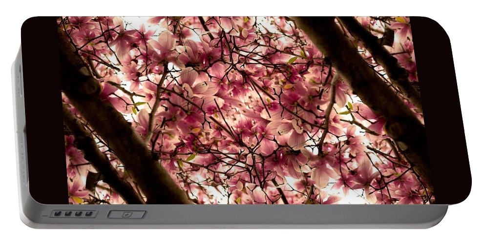 Cherry Blossoms Portable Battery Charger featuring the photograph Blossoming Blossoms by Kathleen Odenthal