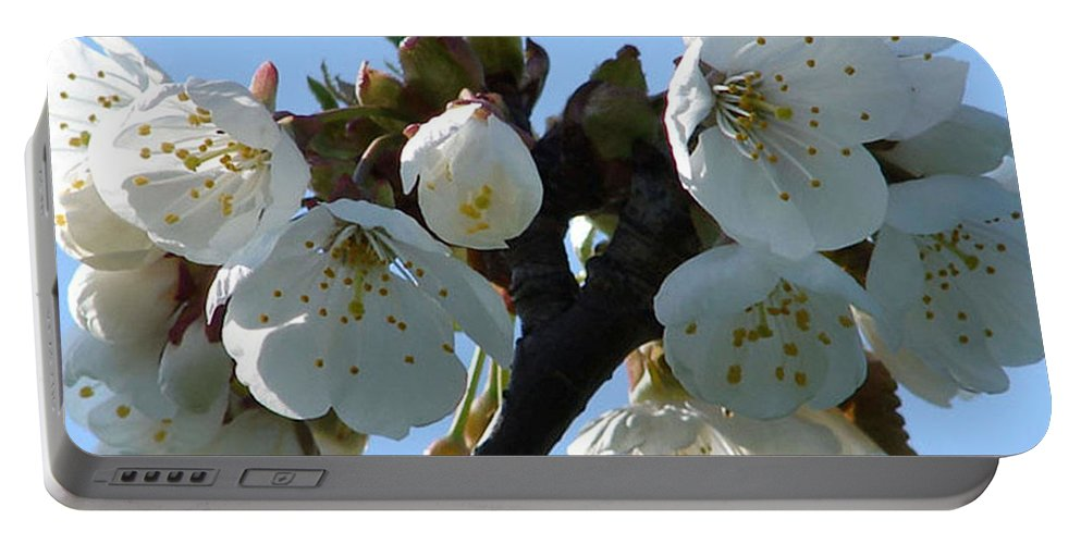 Blossoms Portable Battery Charger featuring the photograph Blossoms 3 by Carol Lynch