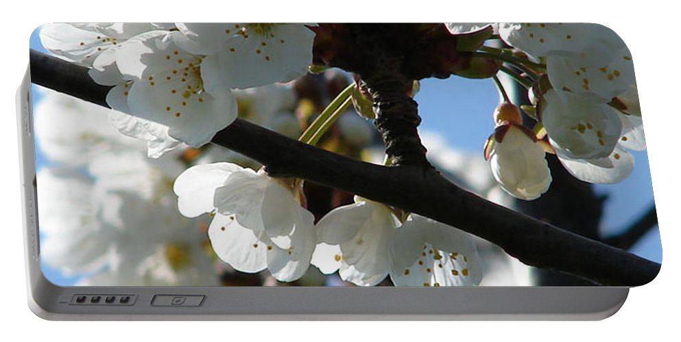 Blossoms Portable Battery Charger featuring the photograph Blossoms 4 by Carol Lynch