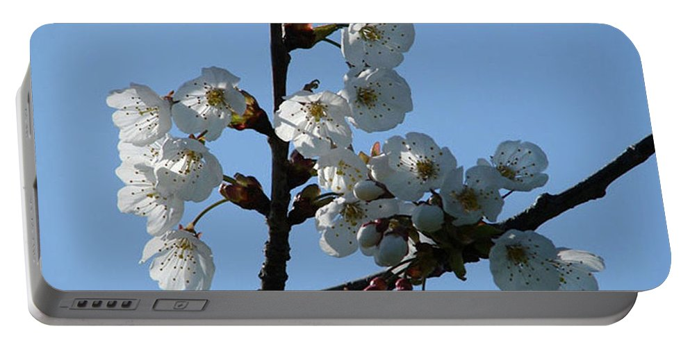 Blossoms Portable Battery Charger featuring the photograph Blossoms by Carol Lynch
