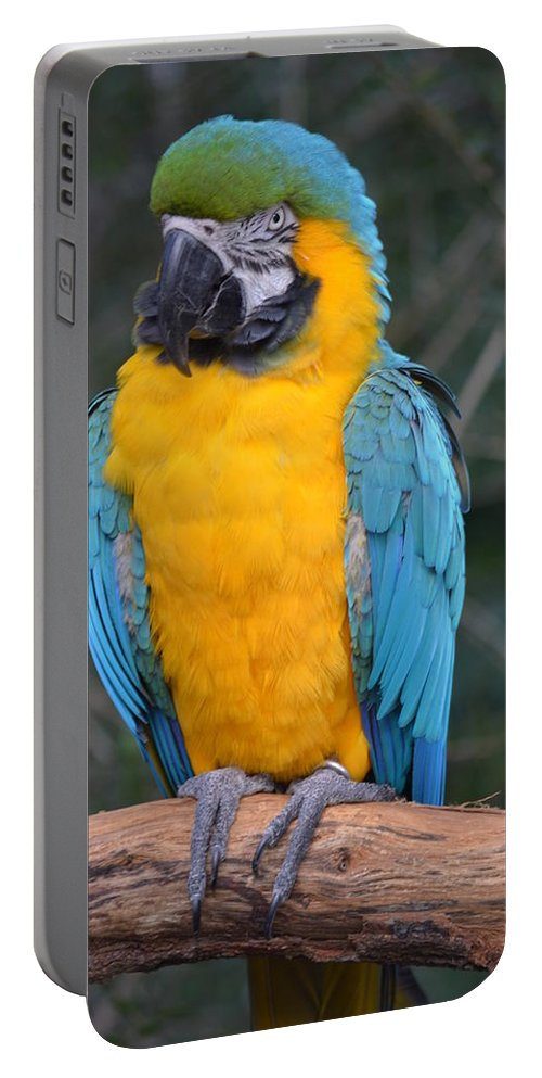 Brevard Portable Battery Charger featuring the photograph Blue And Gold Macaw by Richard Bryce and Family