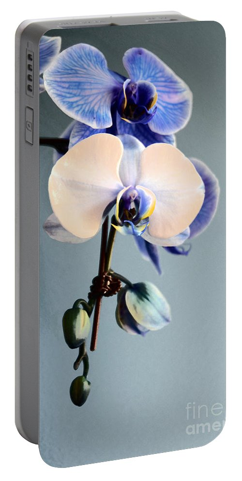 Orchid Portable Battery Charger featuring the photograph Blue And White Orchids by Elaine Berger