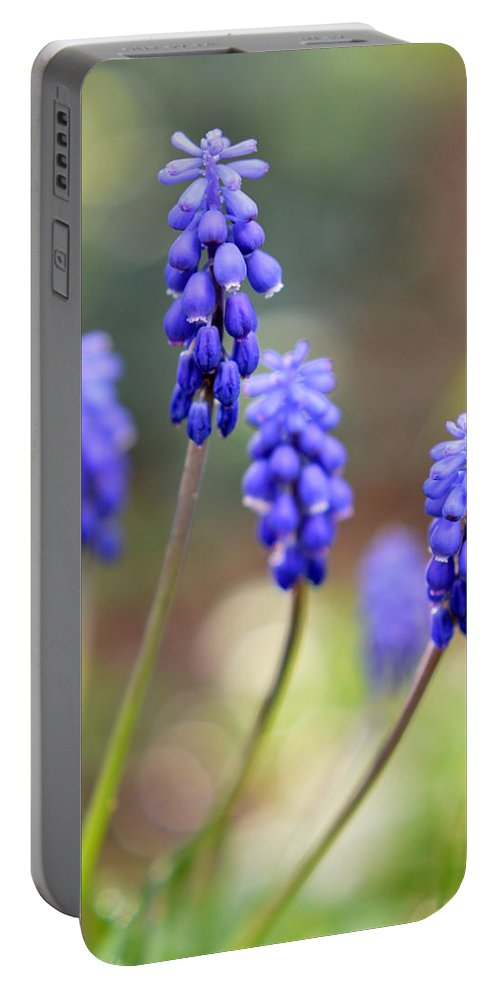 Nature Portable Battery Charger featuring the photograph Blue Bells by Sebastiano Secondi