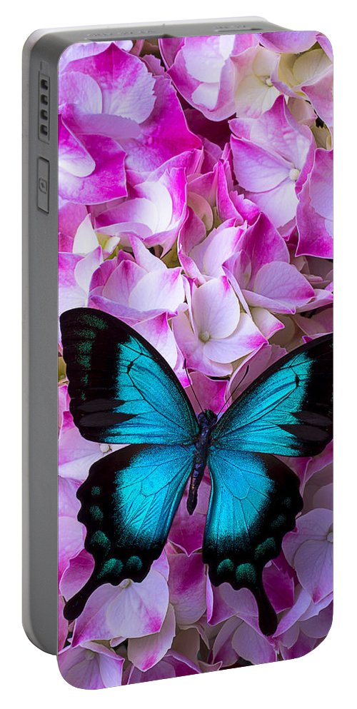 Blue Portable Battery Charger featuring the photograph Blue Butterfly On Pink Hydrangea by Garry Gay
