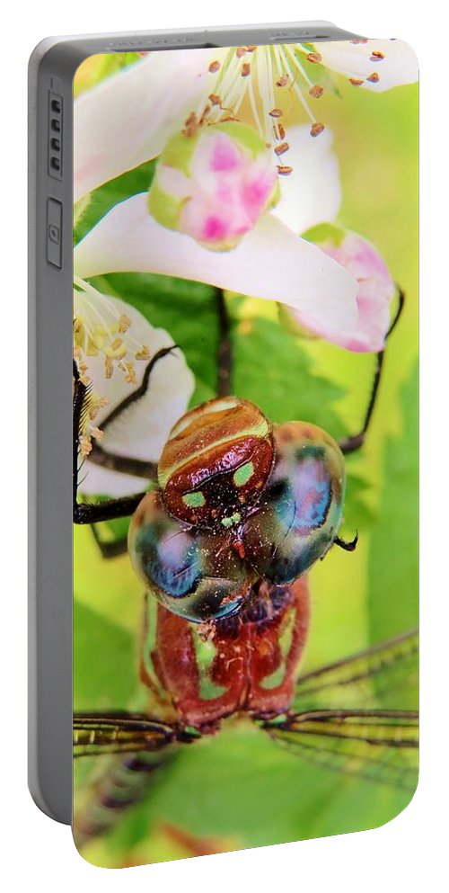 Flower Portable Battery Charger featuring the photograph Blue Eyed Bandits by Art Dingo