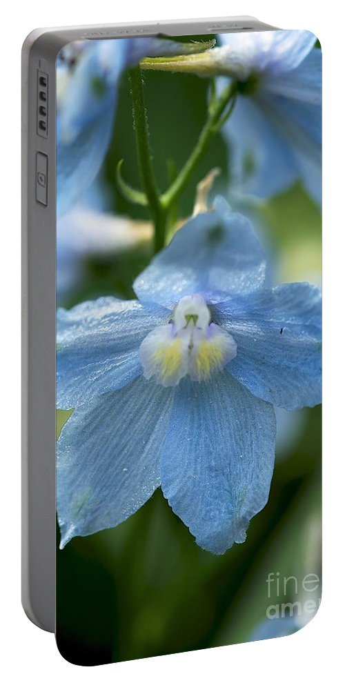 Blue Flower Portable Battery Charger featuring the photograph Blue Fragil by Joseph Yarbrough