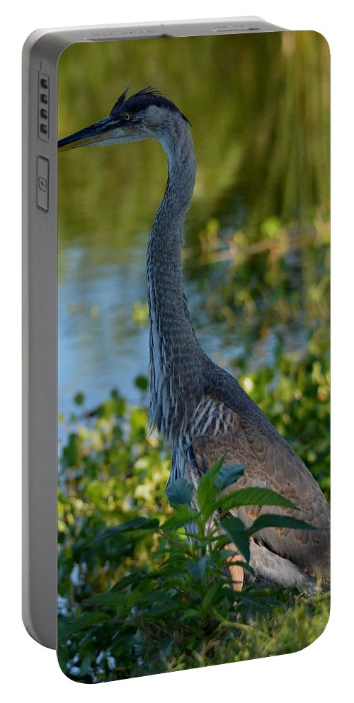 Sunshine Portable Battery Charger featuring the photograph Blue Heron In The White Light by Patricia Twardzik