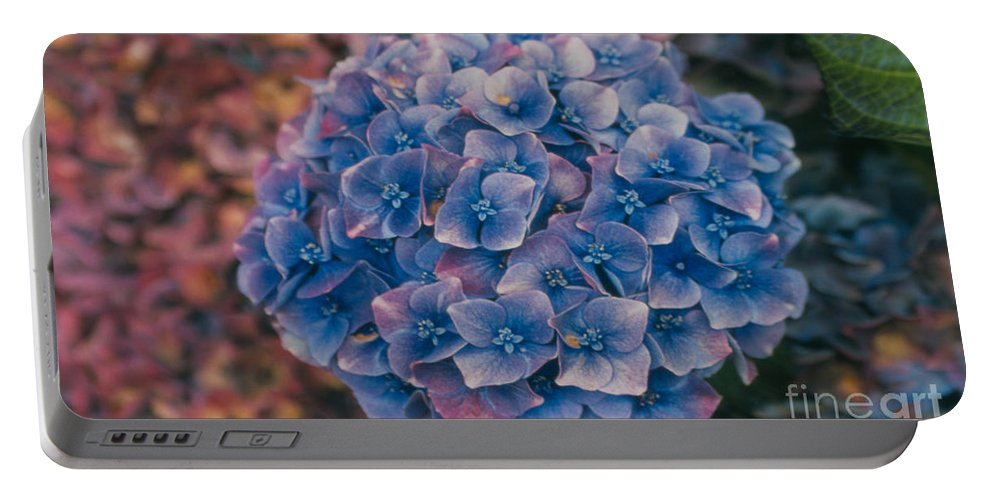 Hydrangea Portable Battery Charger featuring the photograph Blue Hydrangea by Heather Kirk