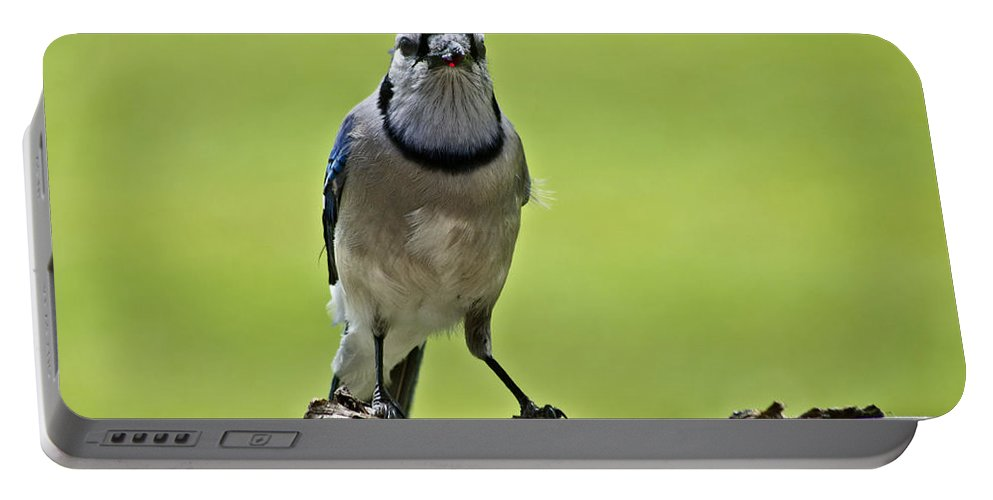 Blue Jay Portable Battery Charger featuring the photograph Blue Jay Meal Time by Shelly Gunderson