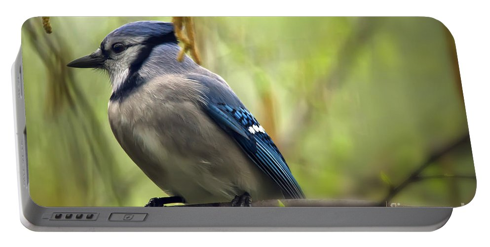 Bird Portable Battery Charger featuring the photograph Blue Jay On A Misty Spring Day by Lois Bryan