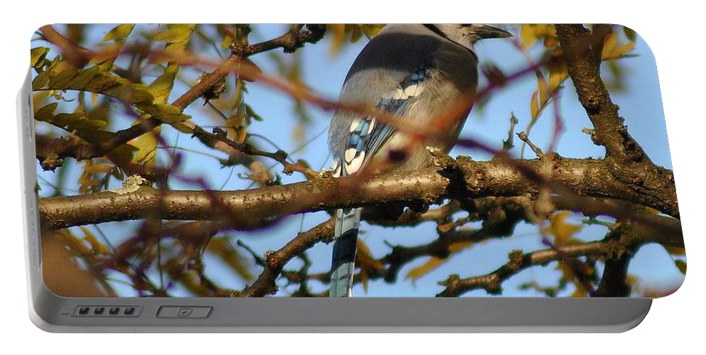 Blue Jay Portable Battery Charger featuring the photograph Blue Jay by Frozen in Time Fine Art Photography