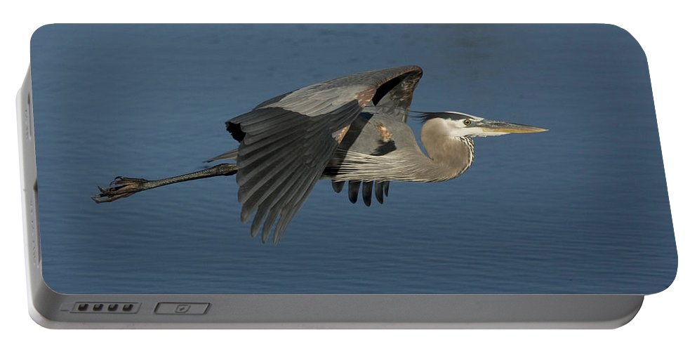 Blue Heron Portable Battery Charger featuring the photograph Blue Lou by Sandy Swanson