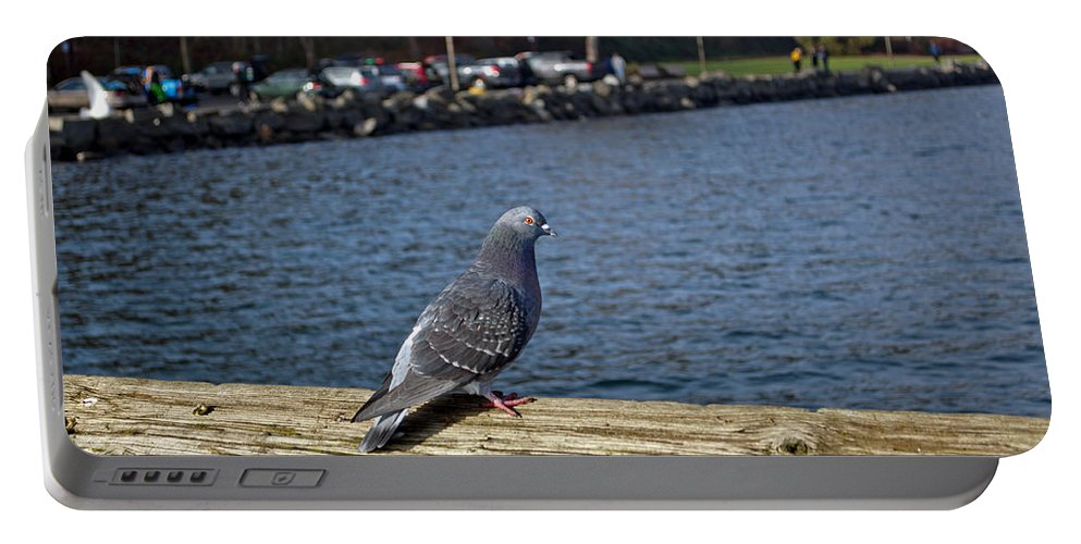 Pigeon Portable Battery Charger featuring the photograph Blue Pigeon by Tikvah's Hope