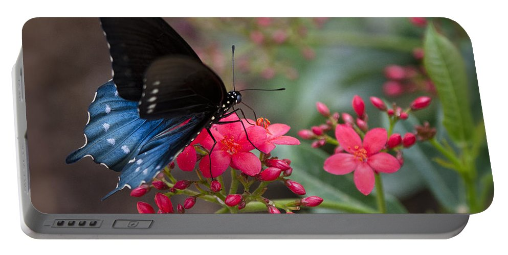 Blue Swallowtail Butterfly Portable Battery Charger featuring the photograph Blue Swallowtail Butterfly by Saija Lehtonen