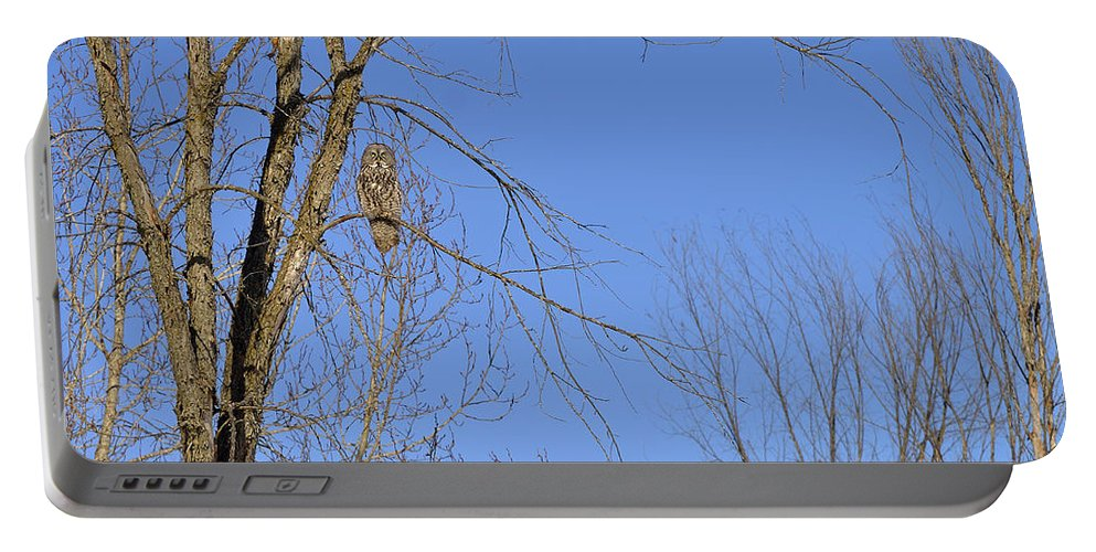 Great Grey Owl Portable Battery Charger featuring the photograph Blue With A Gray by Joshua McCullough
