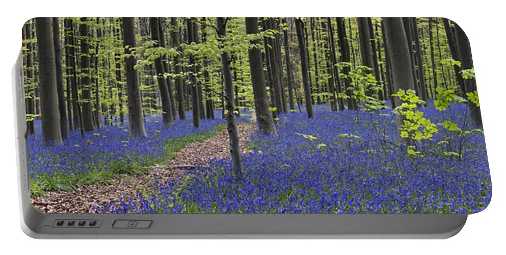 Bluebells Portable Battery Charger featuring the photograph Bluebells In Beech Forest by Arterra Picture Library