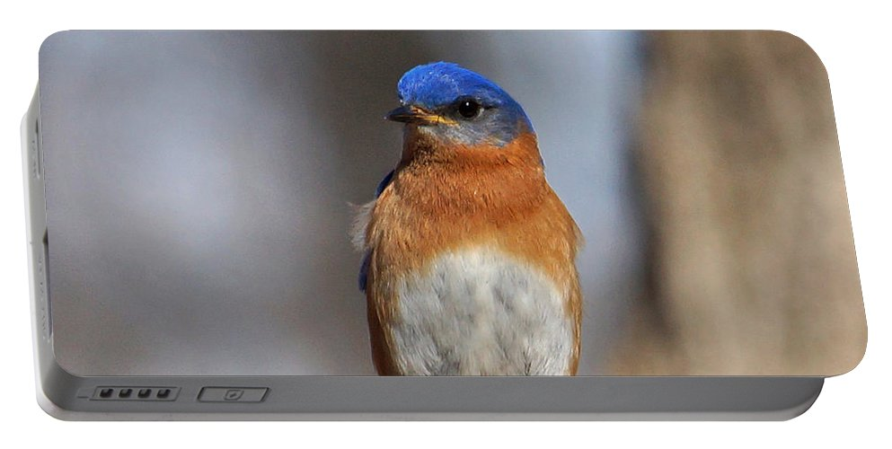 Bluebird Portable Battery Charger featuring the photograph Bluebird Close-up by Sandy Keeton
