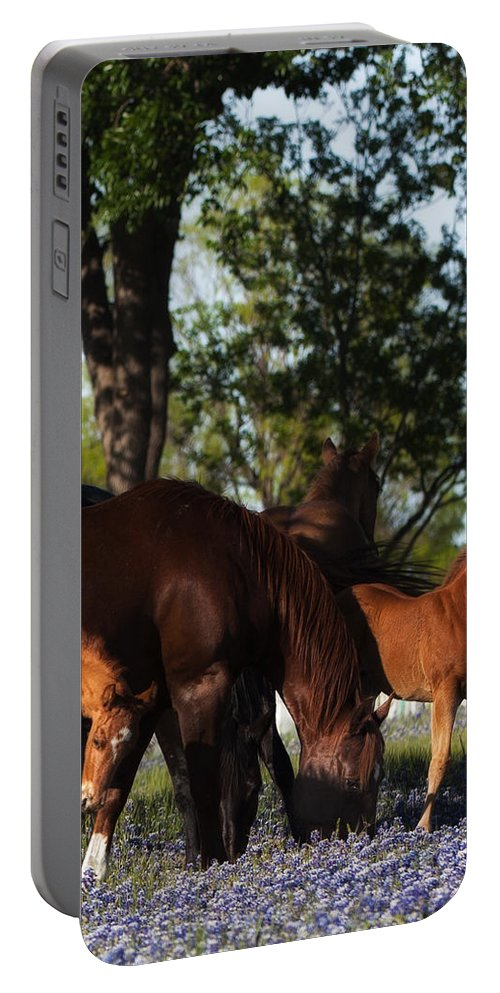 Horse Portable Battery Charger featuring the photograph Bluebonnet Baby by Kelli Brown
