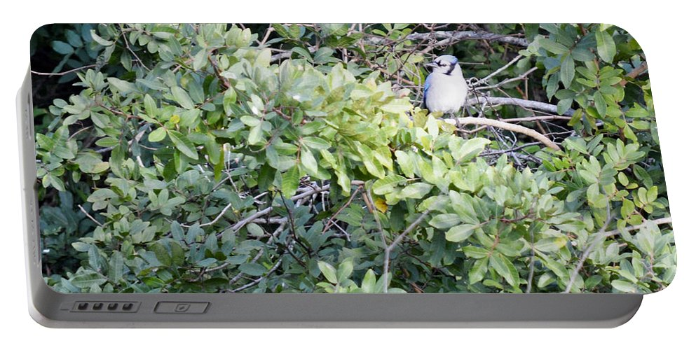 Florida Portable Battery Charger featuring the photograph Bluejay Resting by Linda Kerkau