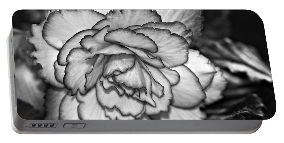 Begonia Portable Battery Charger featuring the photograph Blushing Bw by Steve Harrington