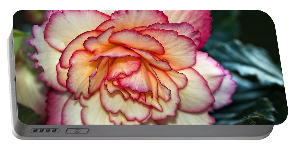 Begonia Portable Battery Charger featuring the photograph Blushing by Steve Harrington
