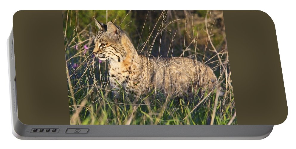 Bobcat Portable Battery Charger featuring the photograph Bobcat In The Grass by Beth Sargent