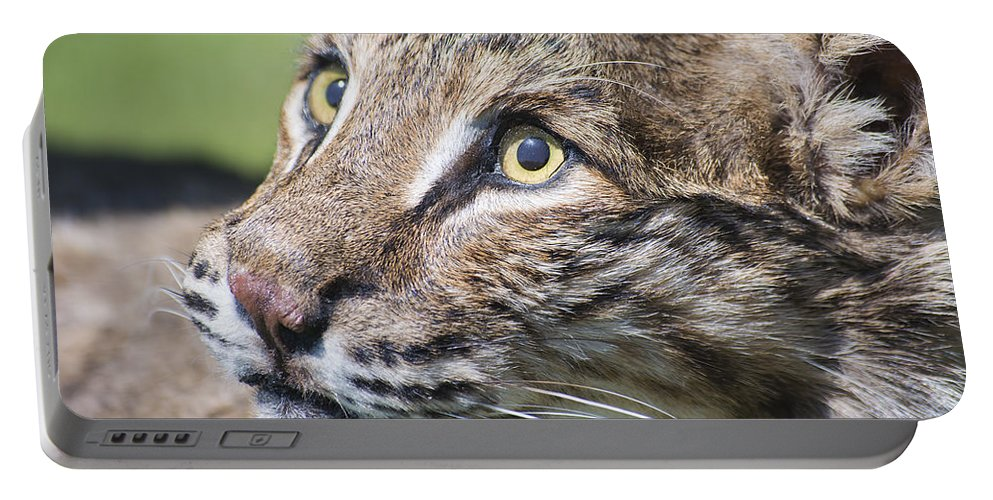 Wildlife Portable Battery Charger featuring the photograph Bobcat by Kenneth Albin