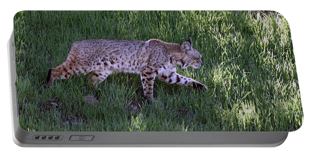 Bobcat Portable Battery Charger featuring the photograph Bobcat On The Move by Shoal Hollingsworth