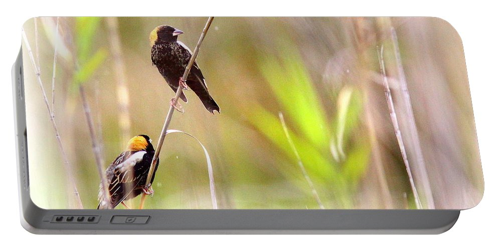 Bobolink Portable Battery Charger featuring the photograph Bobolink - 6 by Travis Truelove