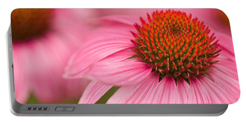 Coneflowers Portable Battery Charger featuring the photograph Boldly Summer by Lindley Johnson