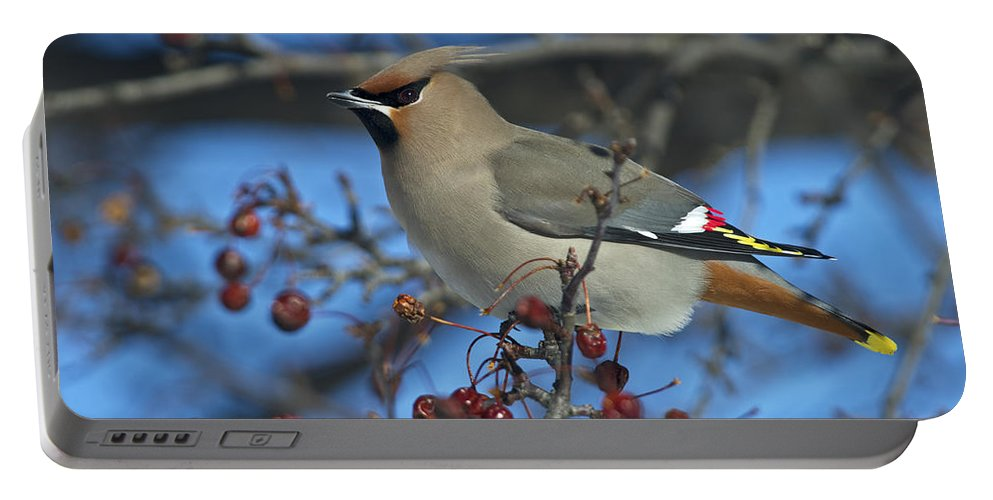 Festblues Portable Battery Charger featuring the photograph Bombycilla Garrulus... by Nina Stavlund