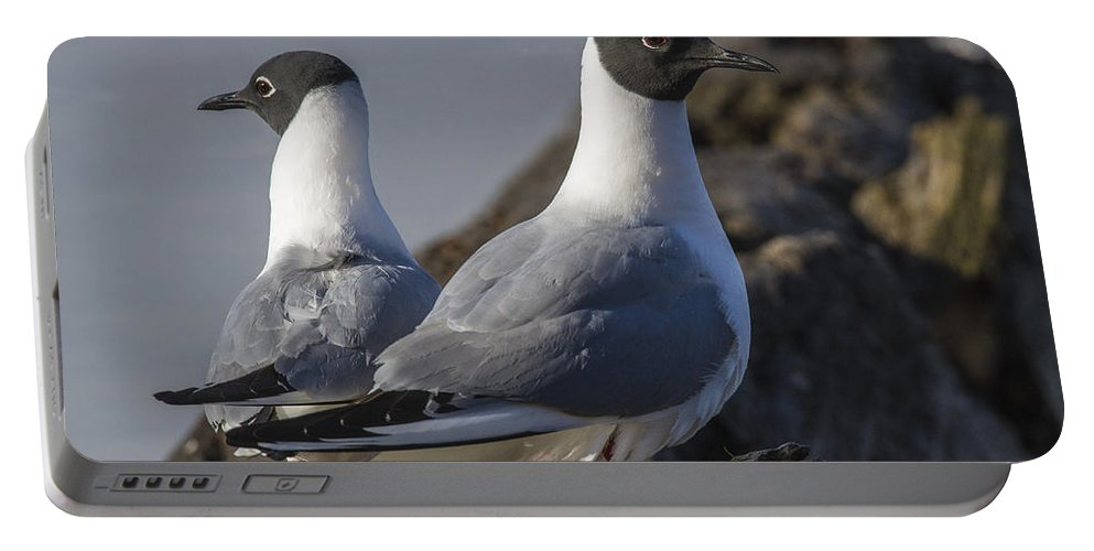 Doug Lloyd Portable Battery Charger featuring the photograph Bonaparts Gull's by Doug Lloyd