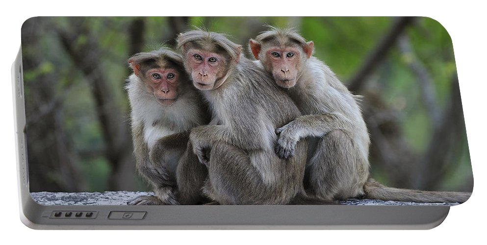 Thomas Marent Portable Battery Charger featuring the photograph Bonnet Macaque Trio Huddling India by Thomas Marent