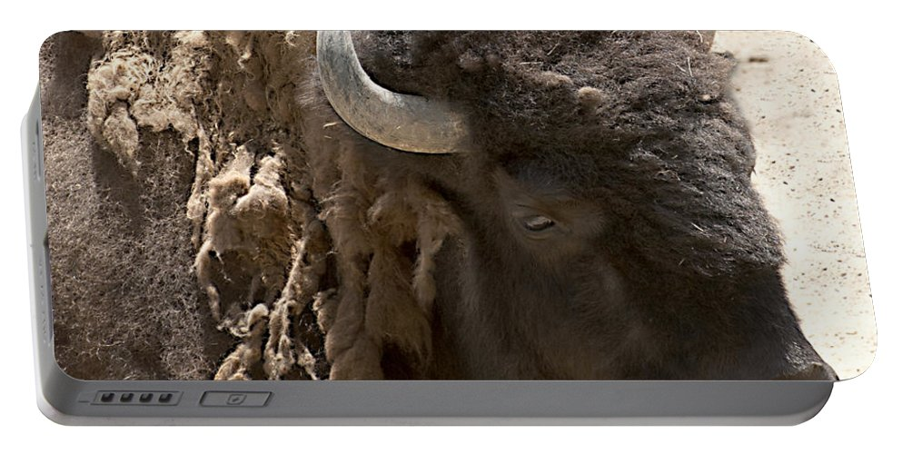 Buffalo Portable Battery Charger featuring the photograph Bored Buffalo by Cindy Angiel